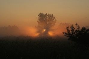 Dawn's Rays