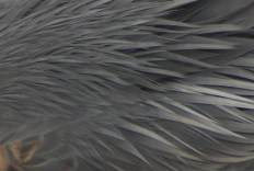 detail of bird feathers