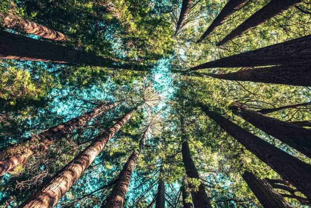 Healthier Habit #9: Spend time in nature