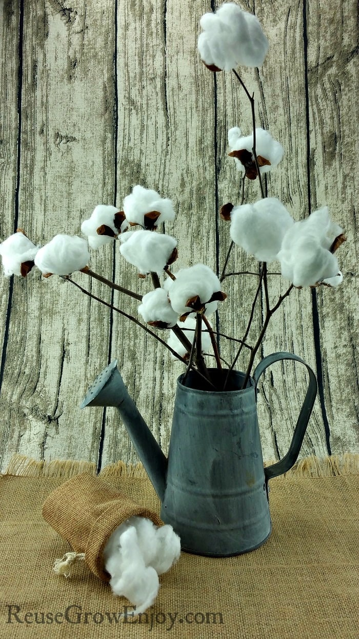 kitchen supplies store design a layout diy cotton stem - farmhouse style decor reuse grow enjoy
