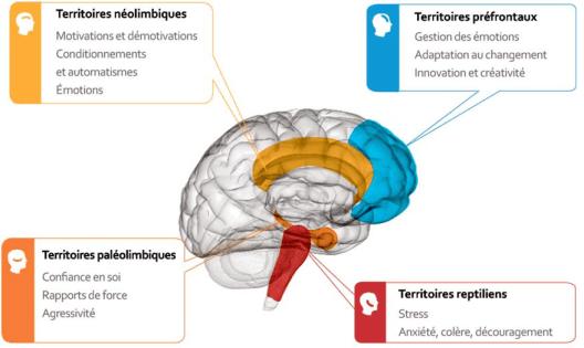 4 cerveaux selon Fradin et 3 modes mentaux