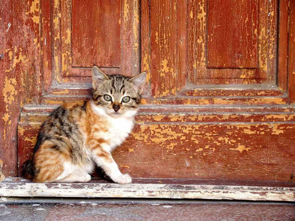 abandoned adorable animal cat