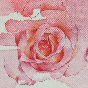 Rose de Jordane
