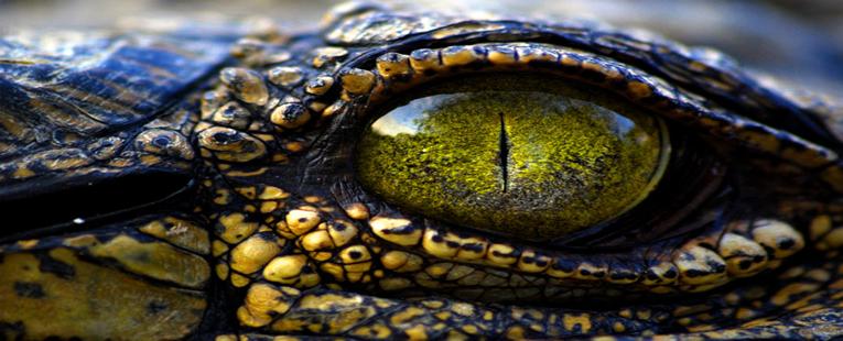 Human Serpent Eyes Captured on Video?