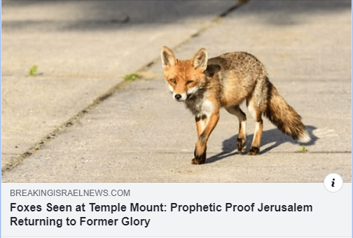 "The Jewish rabbis are pointing to Lamentations 5:18 ""Because of the mountain of Zion, which is desolate, the foxes walk upon it."""