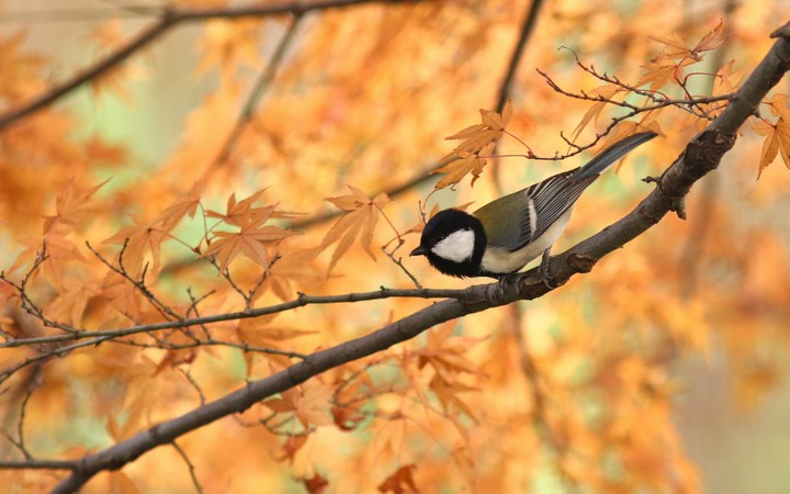 Fall Wallpaper For Facebook Bird On Autumn Branch Wallpaper By Marksteele