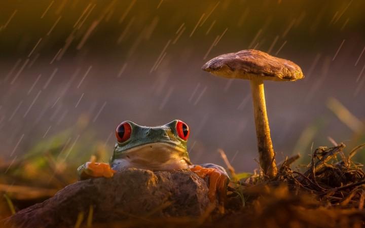 Animal Wallpaper Frog And Mushroom Int The Rain Wallpaper By Lise