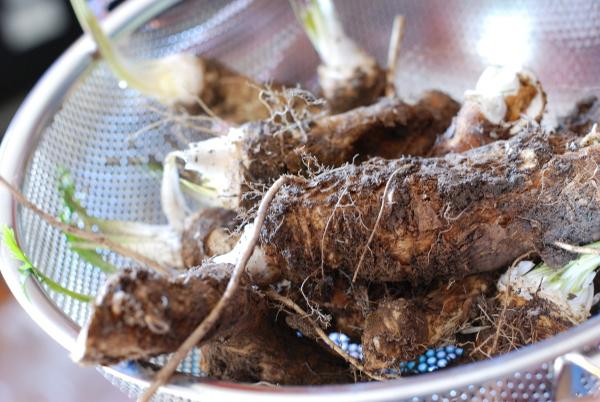 Horseradish from the garden