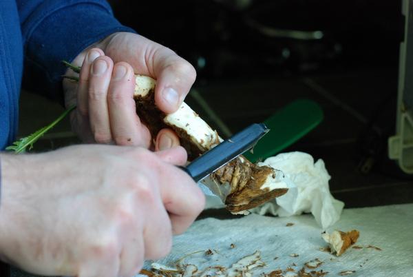 Peeling horseradish root