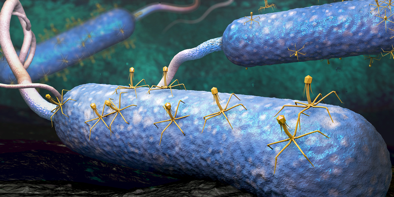Phage Therapy-The New Harmless Antibiotic