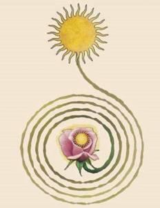 sun spiral to flower