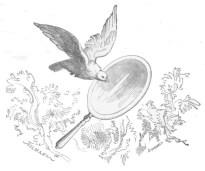 dove_looking_in_mirror