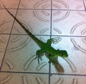Petit iguane juste à al sortie du bureau