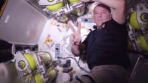 Le 8 juin, l'astronaute Jeff Williams travaille dans le module gonflable BEAM (credit NASA)