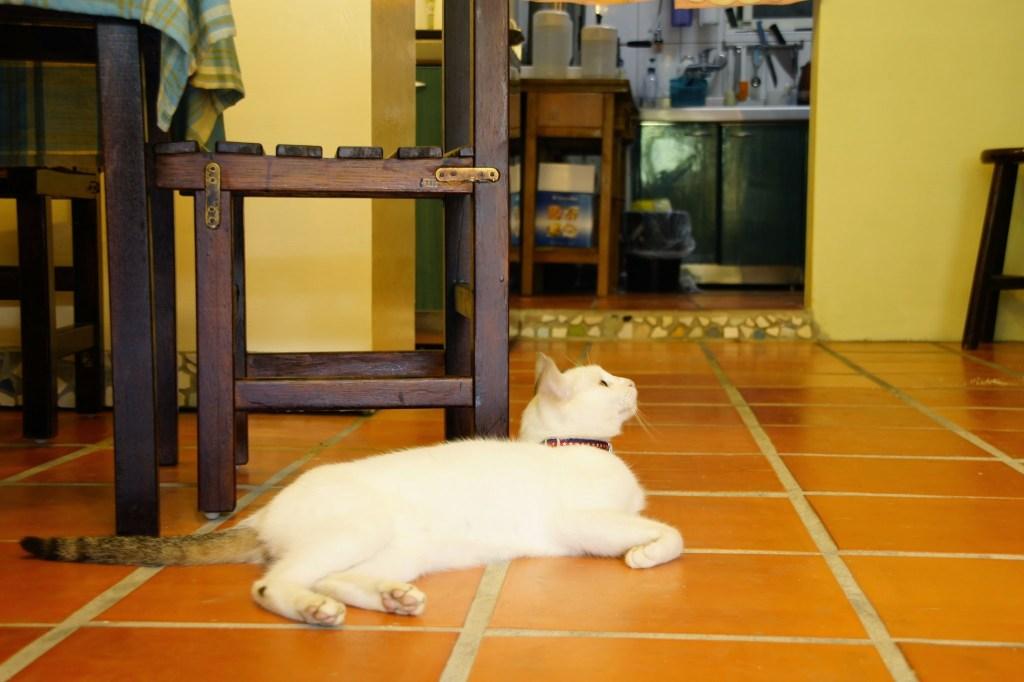 猫村のカフェにて
