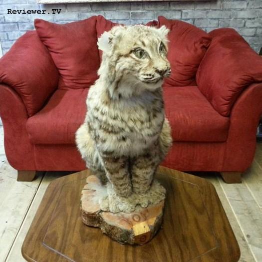 Bobcat prop in Photo Bang Bang, Las Vegas.