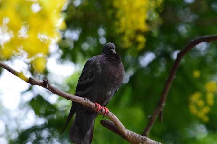 Bird at Tal Barahi Temple