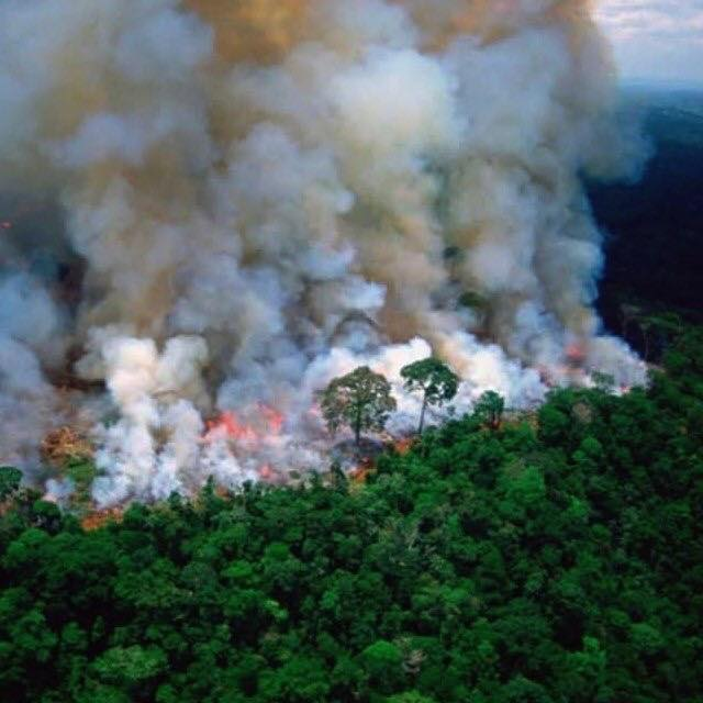 The Amazon is BURNING and Everyone Needs to Know 7