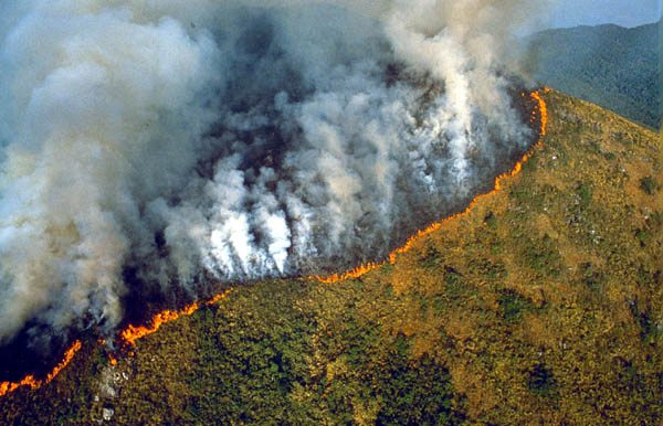 The Amazon is BURNING and Everyone Needs to Know 10