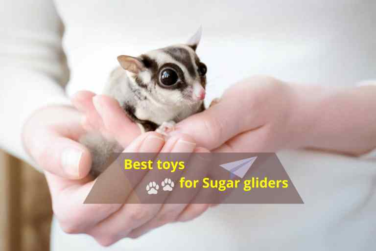 15 Best toys for Sugar gliders