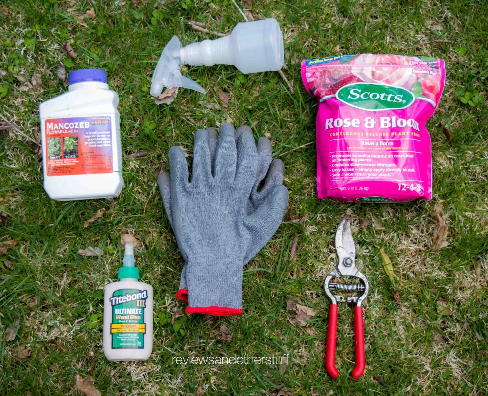 caring for roses during spring
