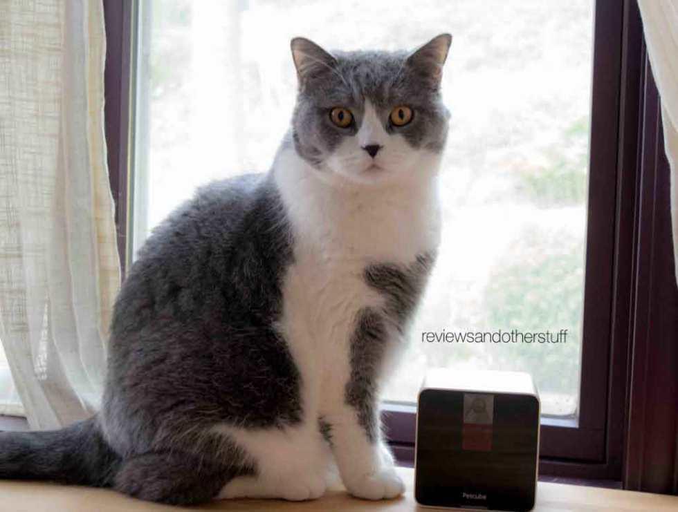 cat with petcube
