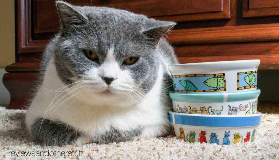 cat bowls by signature housewares