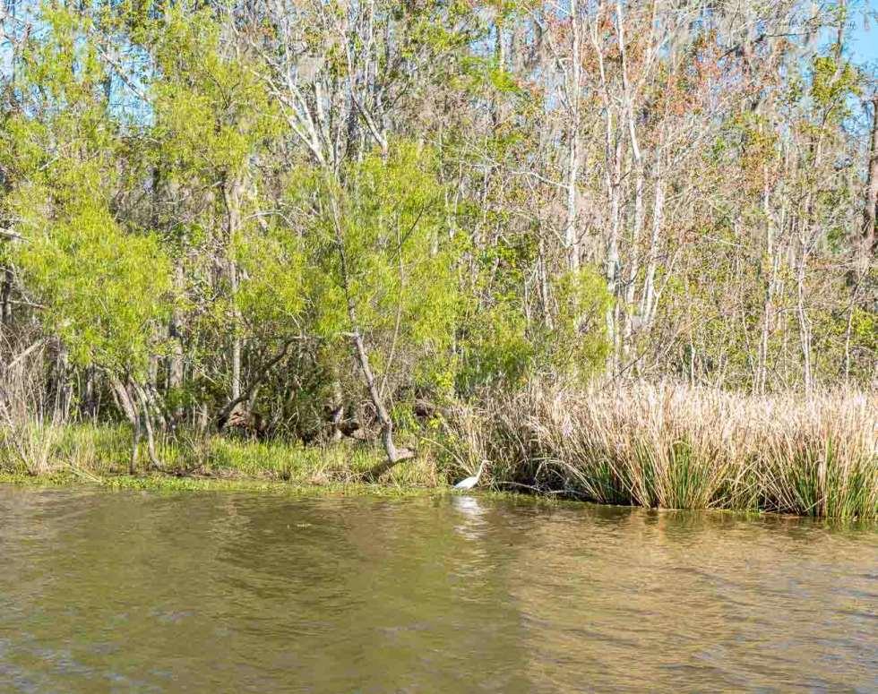 new orleans swamp tour