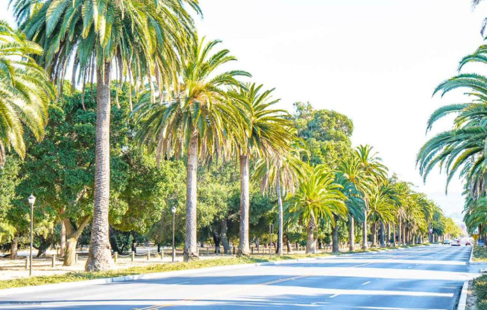 palm drive stanford university
