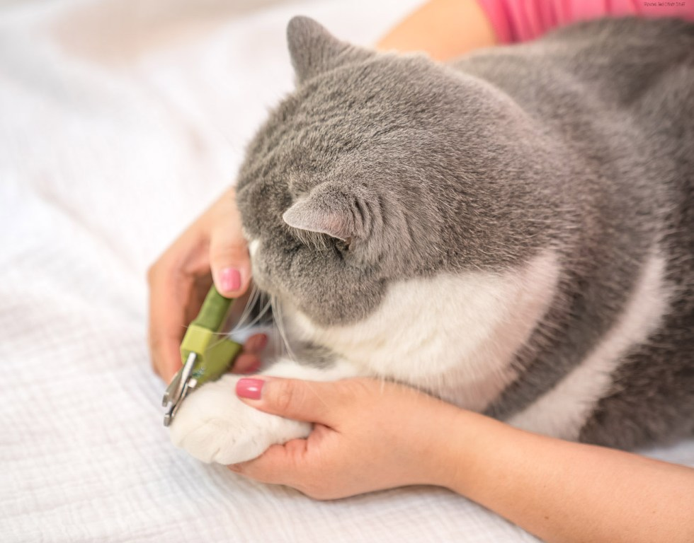 cat nail trimmer