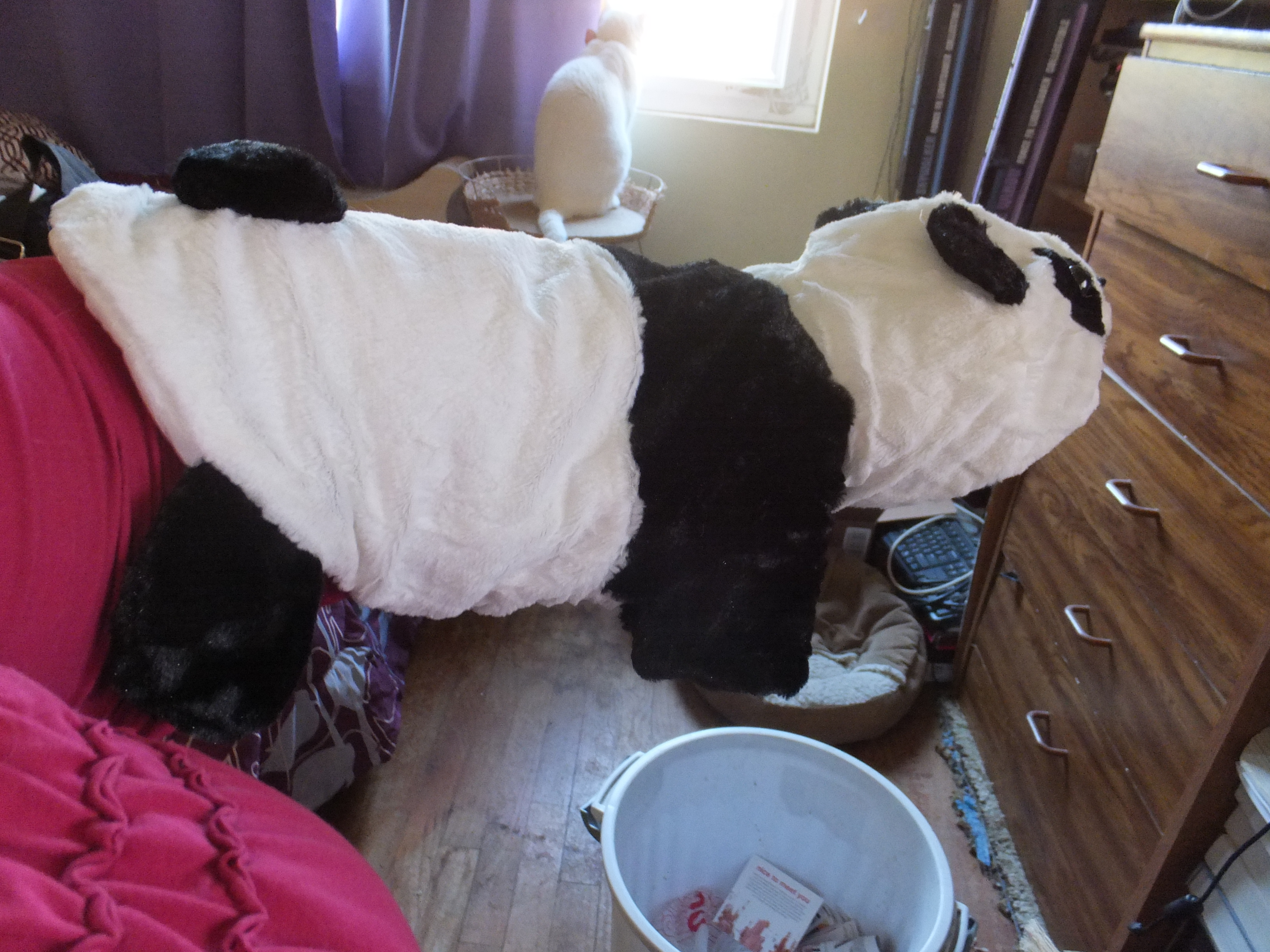 PetPiper Halloween Costume for Dogs: Panda  Reviews By Jo