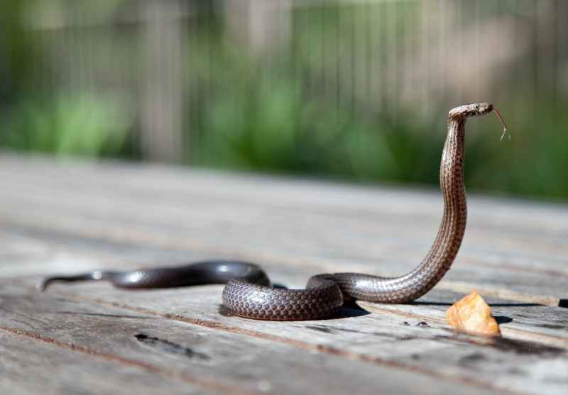 Cool Facts About Snakes