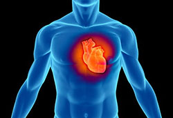 Okinawa Flat Belly Tonic Heart - The Okinawa Flat Stomach Tonic System Evaluate