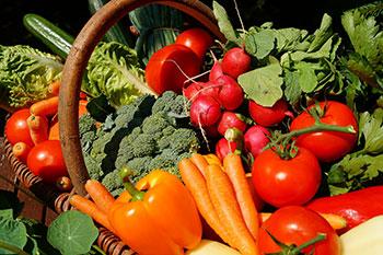 The Plant Based Recipe Cookbook - Vegetables