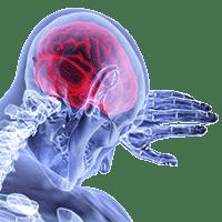 Promind - Brain