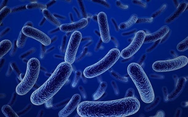 Bào tử lợi khuẩn Bacillus Subtilis