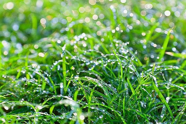 Dew in the morning. Image by UK Met Office