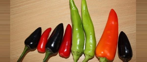 Variation in chillies. Image credit chilipapryczka.pl