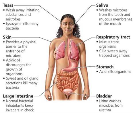 Some of the body's defenses. Image credit schoolbag.info