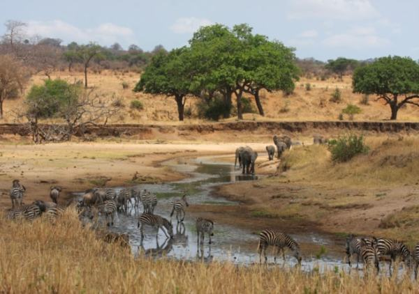 The savannah. Image credit wildnatureinstitute.org
