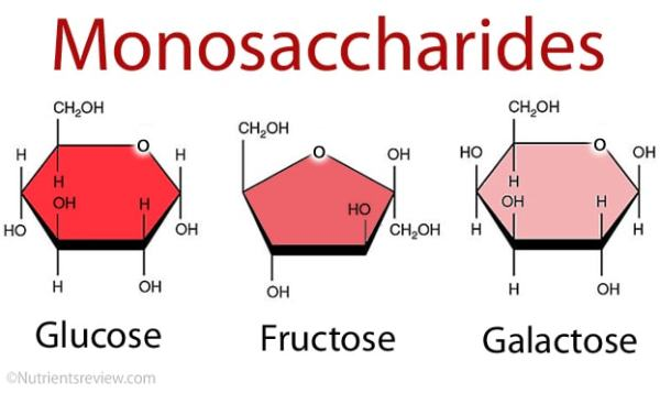 Biology Notes: Chemicals of Life: Carbohydrates - Free