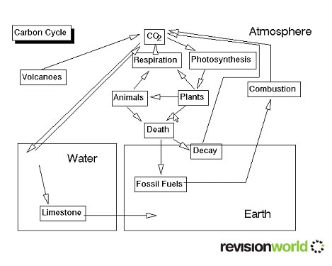 the carbon cycle diagram gcse clarion dxz475mp wiring and nitrogen revision biology an error occurred