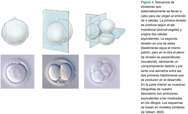 Revista dic2006 Art 35-45 Figura 4