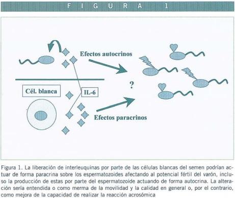 cuando se trabaja en la próstata, los espermatozoides siguen siendo significativos