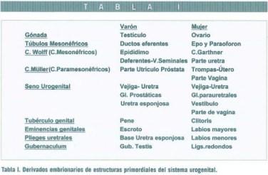 Revista jun2004 Art. 38-53 Tabla I