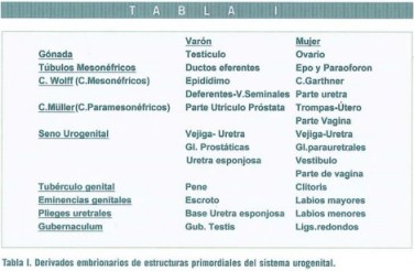 Revista jun2004 Art. 38-53 Tabla I