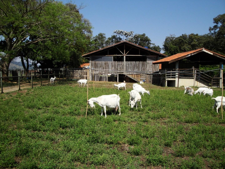 Junta Local na Estrada | Dia 2: Capril do Bosque