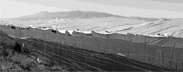 Esclavas ocultas bajo los plásticos de los invernaderos de Almeria