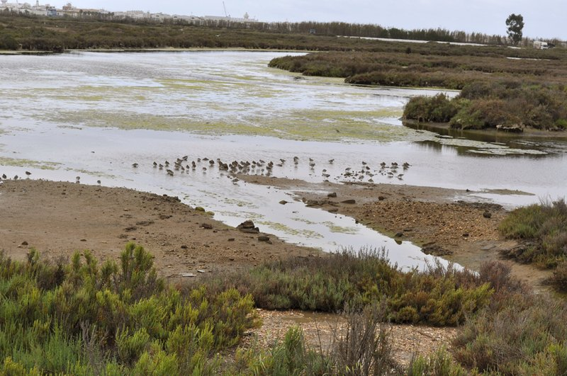 Ocho cargos públicos imputados por el vertido durante años de aguas residuales en la Marisma de Isla Cristina