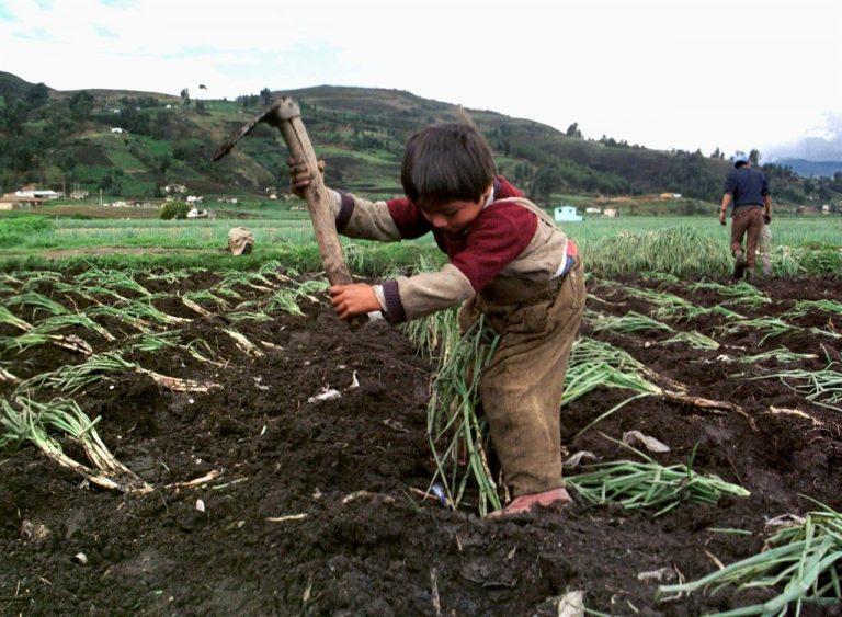Legalizar el horror: Argentina autoriza el trabajo infantil en las tabacaleras de la provincia de Jujuy